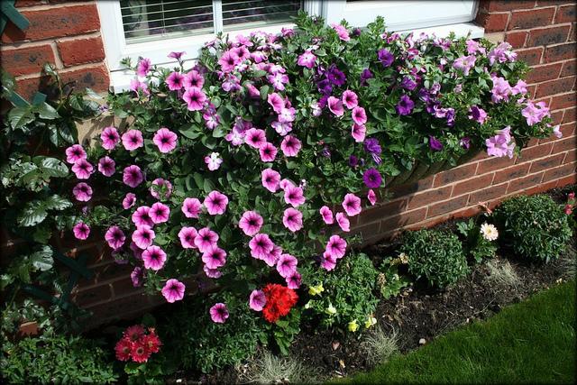 jardim vertical sol pleno planta certa, que seja resistentes ao